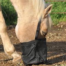 Horse with bucket