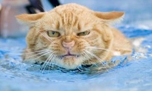 cat in water